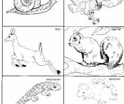 Free coloring and drawings Classified Forest Animals Coloring page