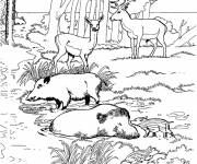 Free coloring and drawings Forest Animals at the Zoo Coloring page