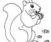 Free coloring and drawings Squirrel of the Forest Coloring page