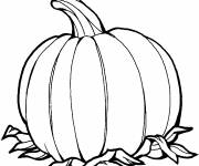 Free coloring and drawings Simple pumpkin Coloring page