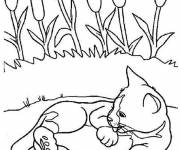 Free coloring and drawings Cute cat cleans itself Coloring page