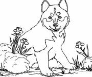 Coloring pages Dog wolf