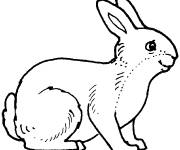 Free coloring and drawings Maternal hare Coloring page