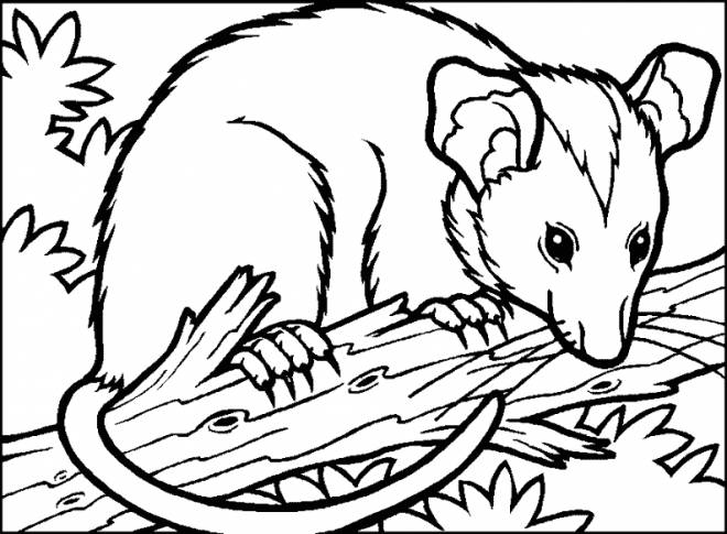 Free coloring and drawings A Color Mouse Coloring page