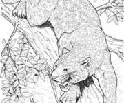 Coloring pages Cougars on the tree