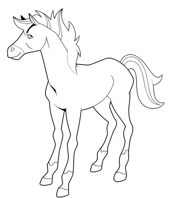 Free coloring and drawings Horseland to print Coloring page