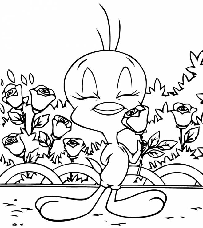 Free coloring and drawings tweety smells a rose Coloring page