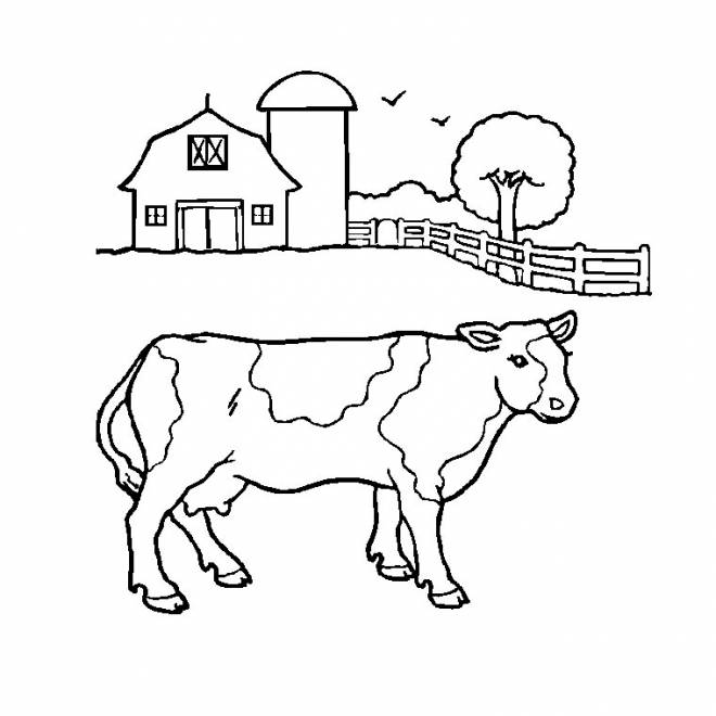 Free coloring and drawings A farm cow Coloring page