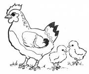Free coloring and drawings Chicken and cubs Coloring page