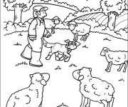 Free coloring and drawings Farm sheep Coloring page