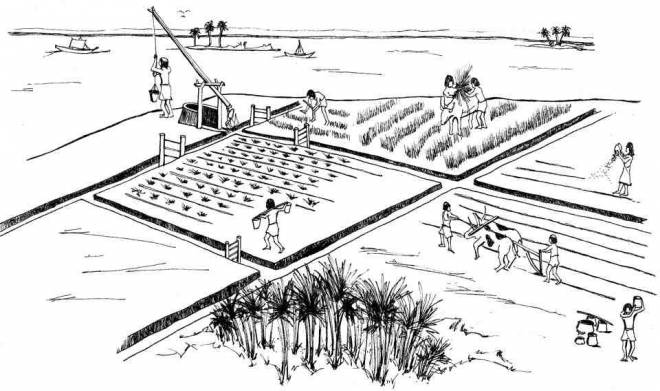 Free coloring and drawings Agriculture in China Coloring page
