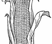 Coloring pages Agriculture Soy