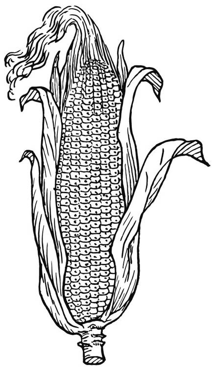 Free coloring and drawings Agriculture Soy Coloring page