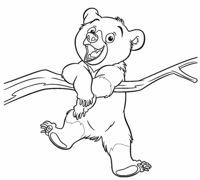 Free coloring and drawings A little bear on the tree Coloring page