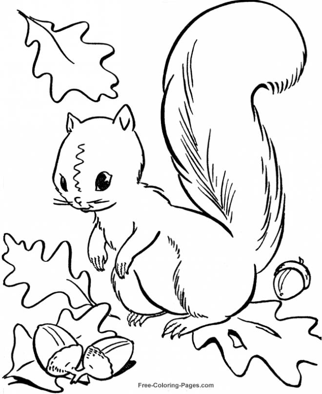 Free coloring and drawings Easy Squirrel and Fall Coloring page