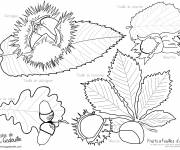Coloring pages Fall Fruits and Leaves