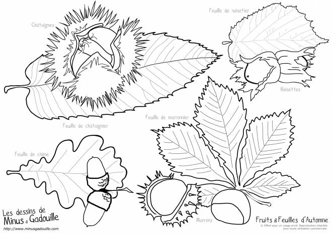 Free coloring and drawings Fall Fruits and Leaves Coloring page