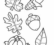 Coloring pages Leaves and Fruits