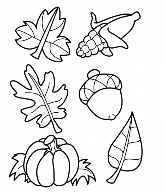 Free coloring and drawings Leaves and Fruits Coloring page