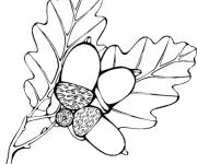 Coloring pages Vector Autumn Fruits and Leaves