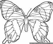 Coloring pages Beautiful butterfly for coloring