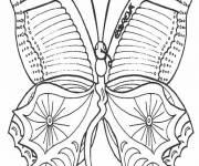 Coloring pages Beautiful Butterfly front view