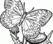 Coloring pages Beautiful butterfly in color