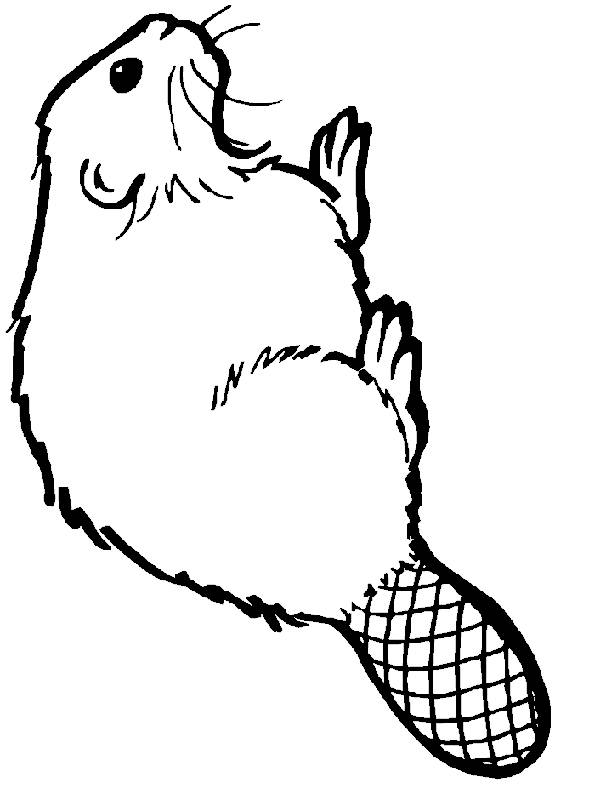Free coloring and drawings Animal Castor Coloring page
