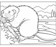 Coloring pages Beaver and Wood