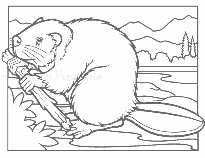 Free coloring and drawings Beaver and Wood Coloring page