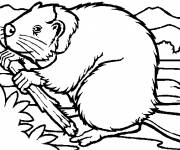 Coloring pages Beaver builds a Dam
