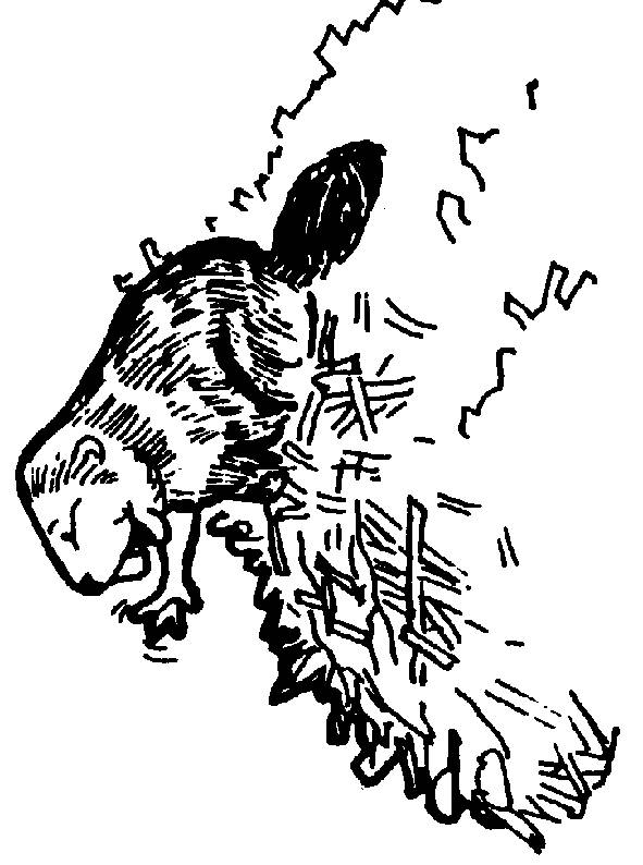 Free coloring and drawings Beaver Dam Coloring page