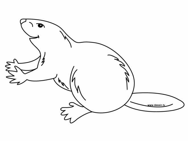 Free coloring and drawings Beaver for child Coloring page