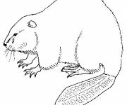 Coloring pages Beaver in pencil