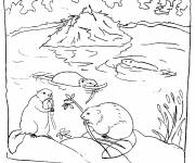 Coloring pages Beavers in the wild
