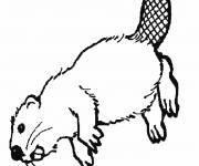 Coloring pages Canadian Beaver