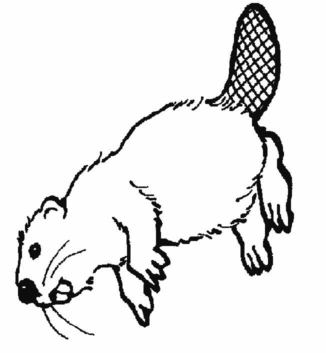 Free coloring and drawings Canadian Beaver Coloring page