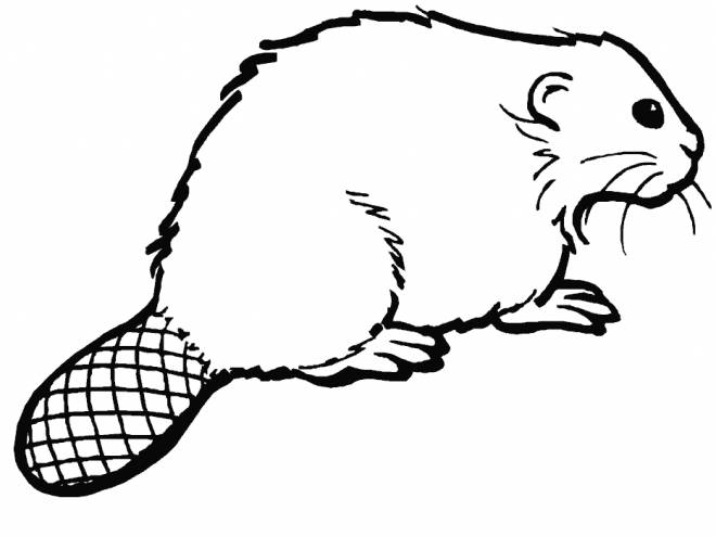 Free coloring and drawings Color beaver Coloring page