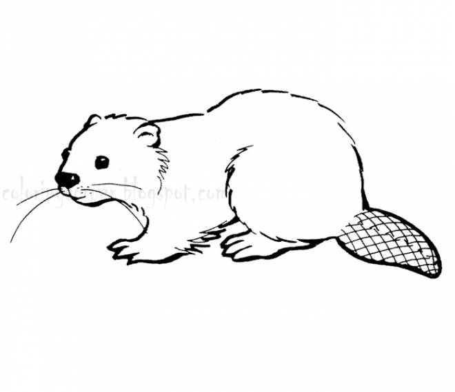 Free coloring and drawings Easy Beaver Coloring page