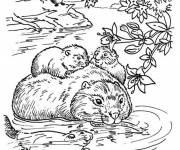 Coloring pages Family Beaver