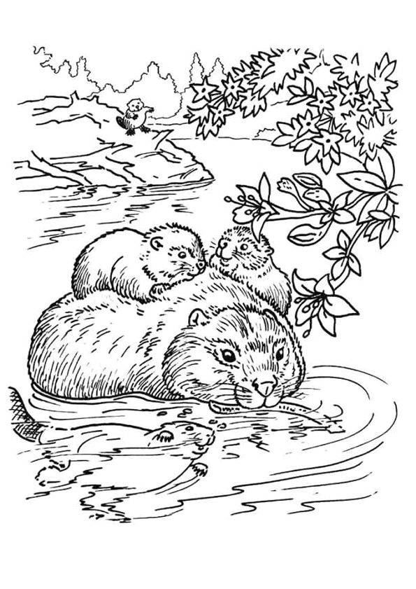 Free coloring and drawings Family Beaver Coloring page