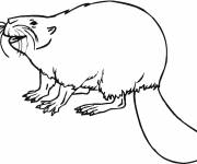 Coloring pages Hilarious beaver