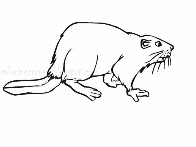 Free coloring and drawings Maternal beaver Coloring page