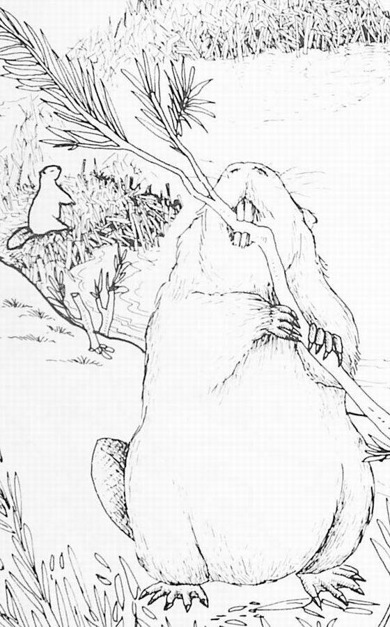 Free coloring and drawings Realistic beaver Coloring page