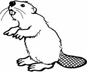 Coloring pages Standing beaver