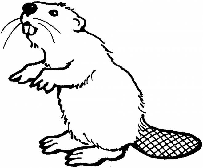 Free coloring and drawings Standing beaver Coloring page