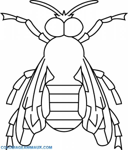Free coloring and drawings Bee front view Coloring page