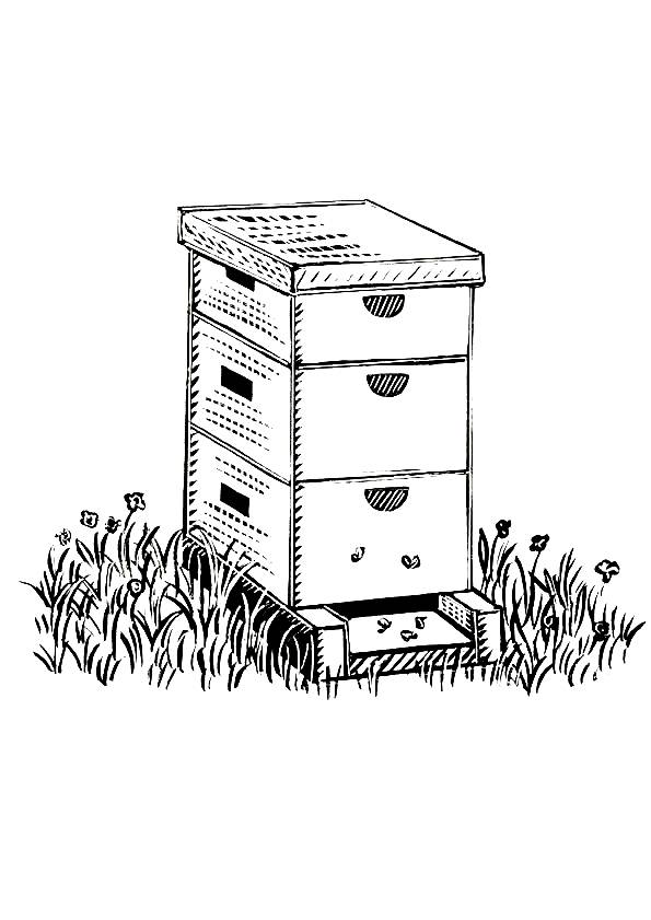 Free coloring and drawings Bee hive Coloring page