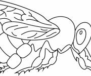 Coloring pages Bee in black
