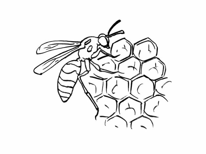 Free coloring and drawings Bee on Cells Coloring page